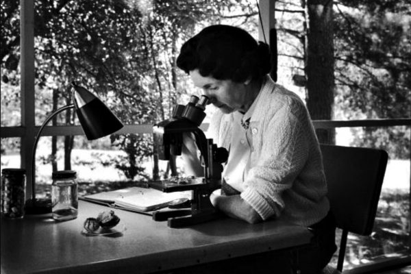 Rachel Carson's passionate crusade: A sea change in the movement to protect nature