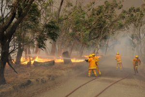 Government neglect and denial of climate change ignite string of deadly wildfires