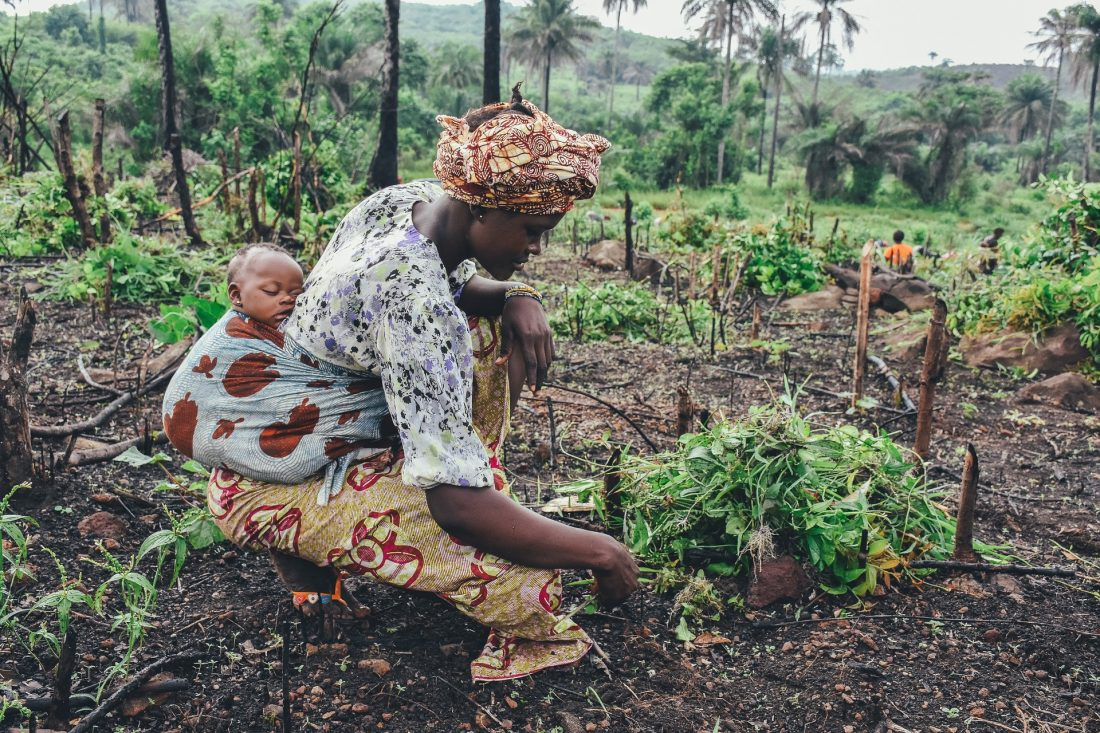 A woman works in a field with a sleeping baby slung against her back.